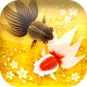 Wa Kingyo – 和金魚 – 1.5.1 [iPhone] 〜 花の形をした餌を与えることもできる、日本画風に描かれた金魚たちが泳ぐ姿を眺めて癒される